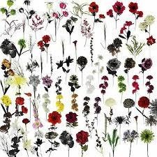Manidhar Flowers